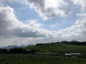 了美 Vineyard and Winery